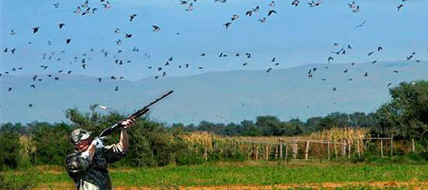 Dove hunting beneficial for local businesses